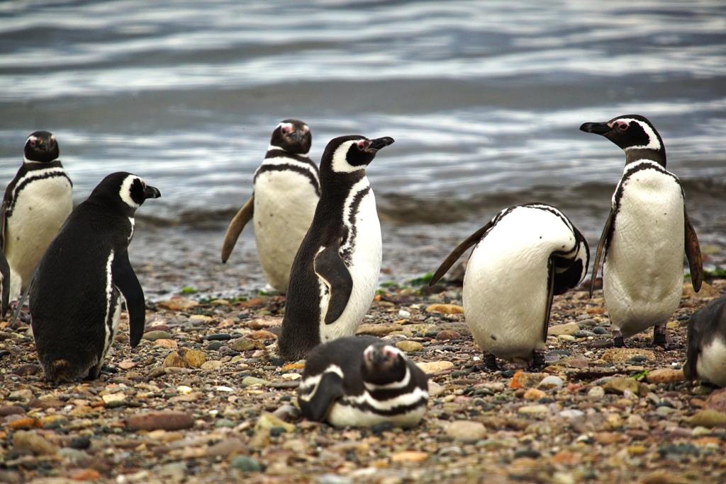 Foto 2 Parque Interjurisdiccional Marino Costero Patagonia Austral- Magallanes PH_ Parques Nacionales
