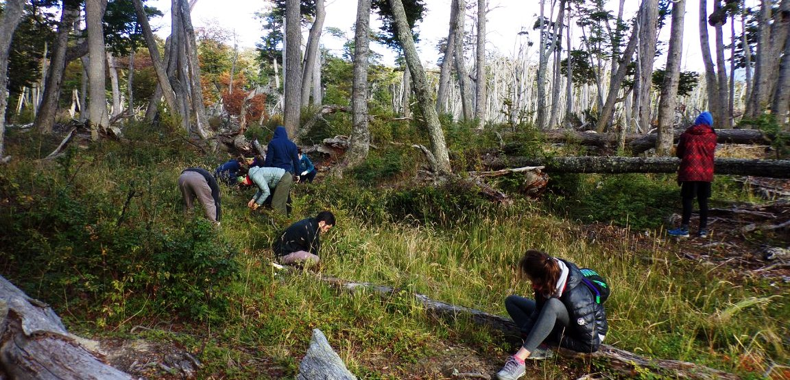 bosque bahia torito recupera